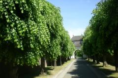 Baumalle Kloster Knechtsteden