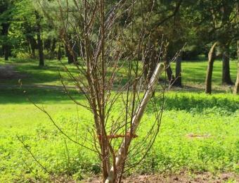 Pflanzung von neuen wertvollen Gehölzen