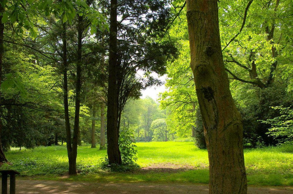 Führung durch den Frühlingswald im Arboretum – Neuss-Reuschenberg