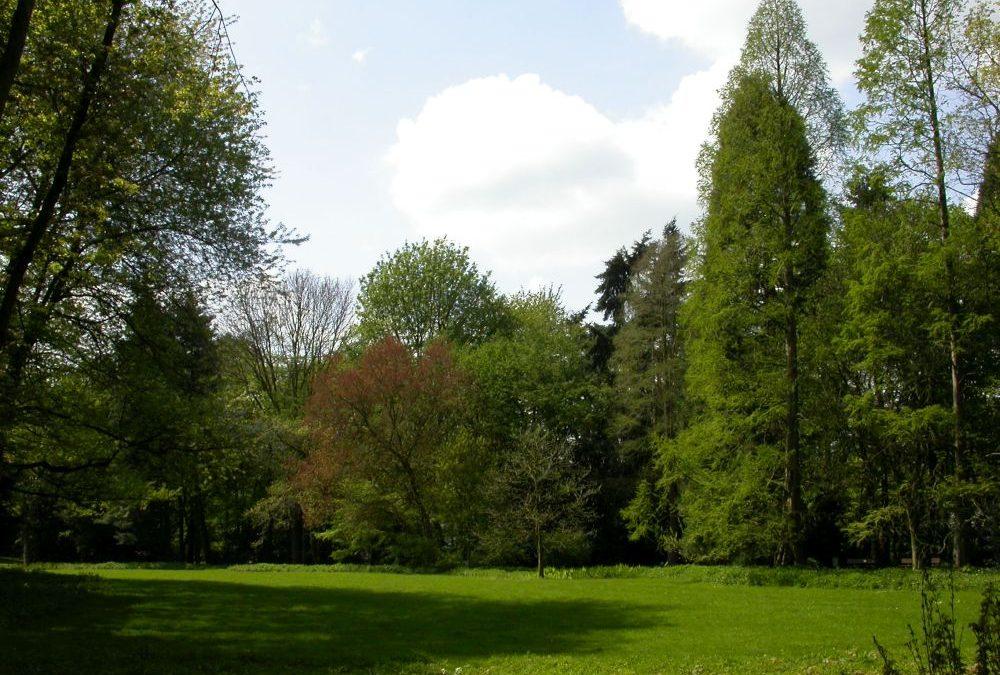 Einladung zur Führung durch den Herbstwald im Arboretum (lebendes Baummuseum) in Neuss-Reuschenberg